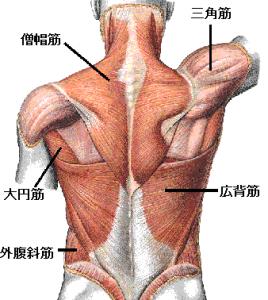 懸垂,効果,筋肉,腹筋,握力