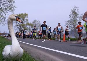 洞爺湖マラソン,2017,日程,エントリー,申込,開始,コース