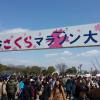熊谷さくらマラソン2017 日程・エントリー日・コースまとめ!