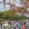さが桜マラソン2018 日程・エントリー申込日・コース情報まとめ!